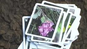 Patterns Method of Plant Identification