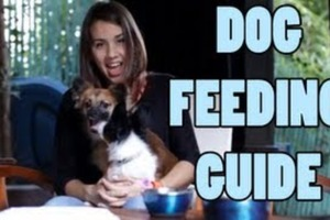 Dog Feeding Guide - How To Feed A Dog