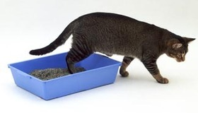 Train a Cat to Use a Litterbox