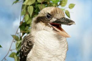 Expert Bird Caller