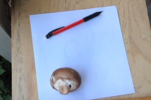 Description: Draw and Label a Mushroom