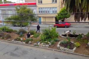 Street Gardening