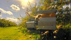 Beehive Panorama