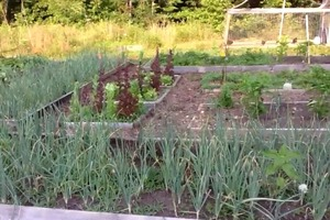 Backyard farm vegetable garden update