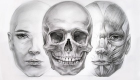 Facial Anatomy Study