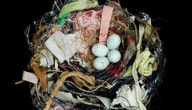 25 Photos of Birds Nests