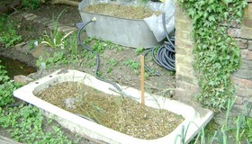 Reed Bed for Greywater Recycling