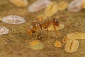 Crazy Ant Farm
