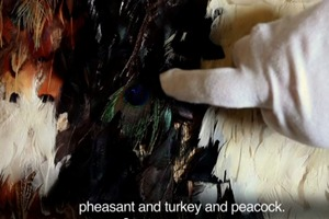 Hokimate Harwood -- Identifying Feathers