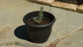 Plant a Tree in a Pot
