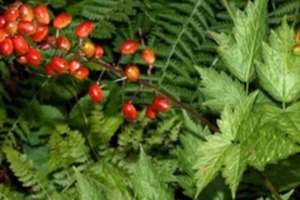 How To Identify a Poisonous Plant