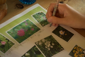 Plant Guide, labeling photos i took