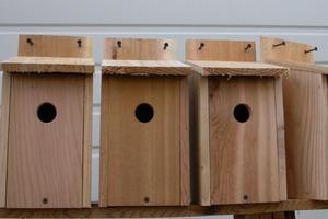 Birdhouse Hole Size Chart