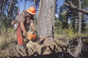 Loggers of Potlatch Part 1: Tree Felling