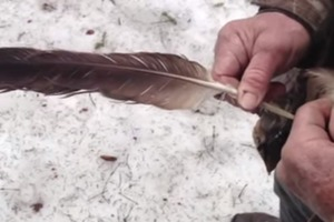 Identification of eagle feather