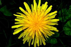 10 Wild Medicinal Herbs