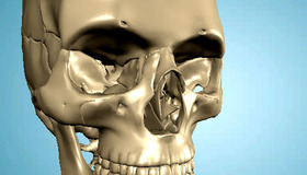 Interactive 3D Anatomy Models