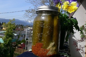 Probiotic Rich Dill Pickles