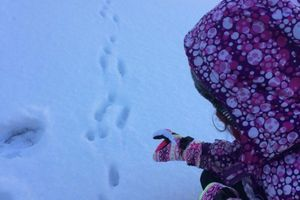 Animal Tracks - Following a Rabbit