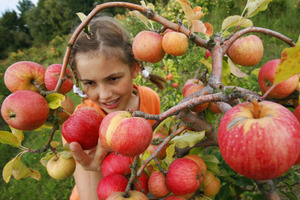Forage for Neighborhood Fruit