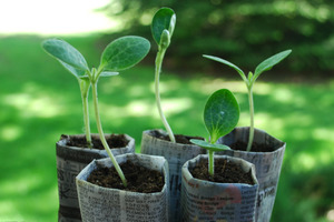How To Grow a Seedling