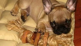 Tasty Sweet Potato Chew Toy for Dogs